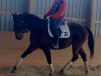 Metronome excelling in his new role as an Eventer! Image