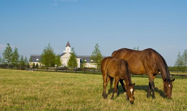Stronach receives TRF award for dedication to equine retirement  Image